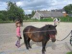 le poney le plus brossé de bretagne
