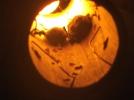 Bébés chauve-souris dans lampe en bambou