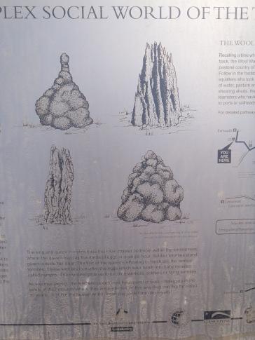 Termitières