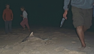 Requin peche a Red Bluff