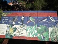 les oiseaux qu on a pu admirer en Australie