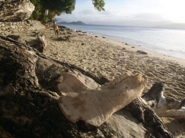 Dernier naufragé de l'île...