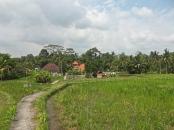 Environs d'Ubud