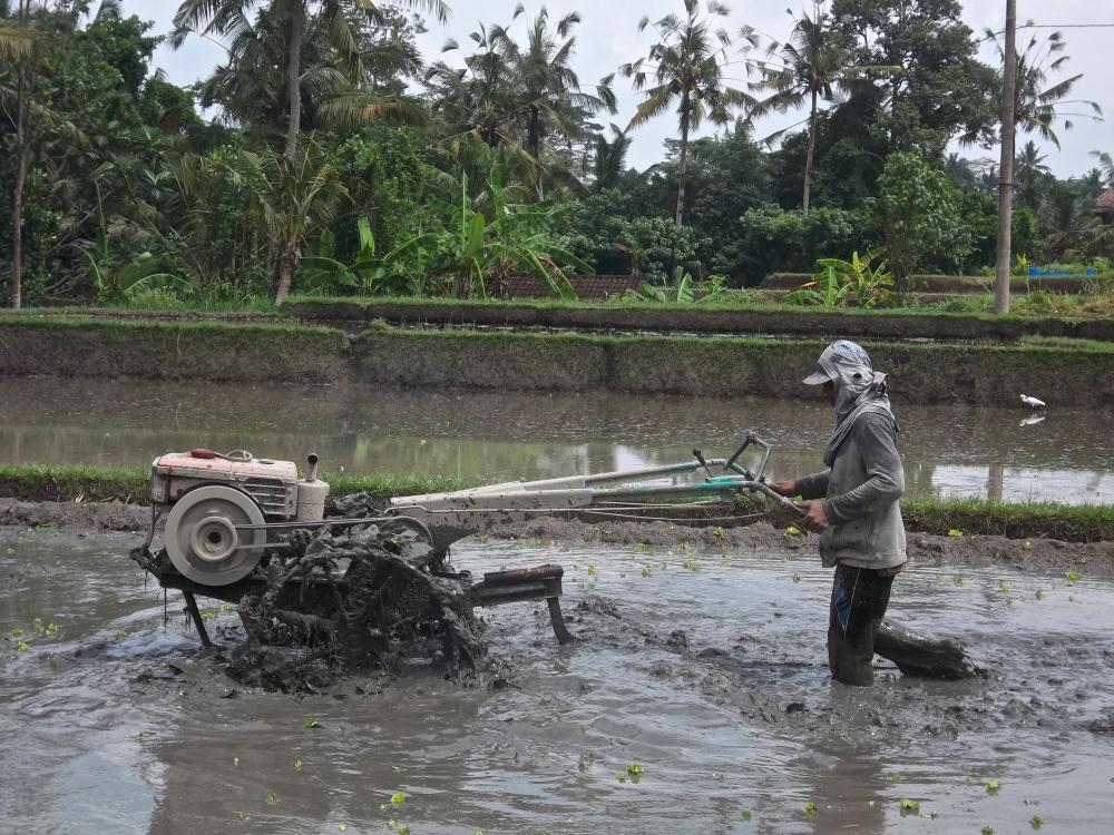 Ubud, ou comment se réconcilier avec Bali… (5/6)