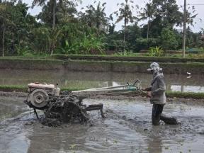 Travailleur dans une rizière