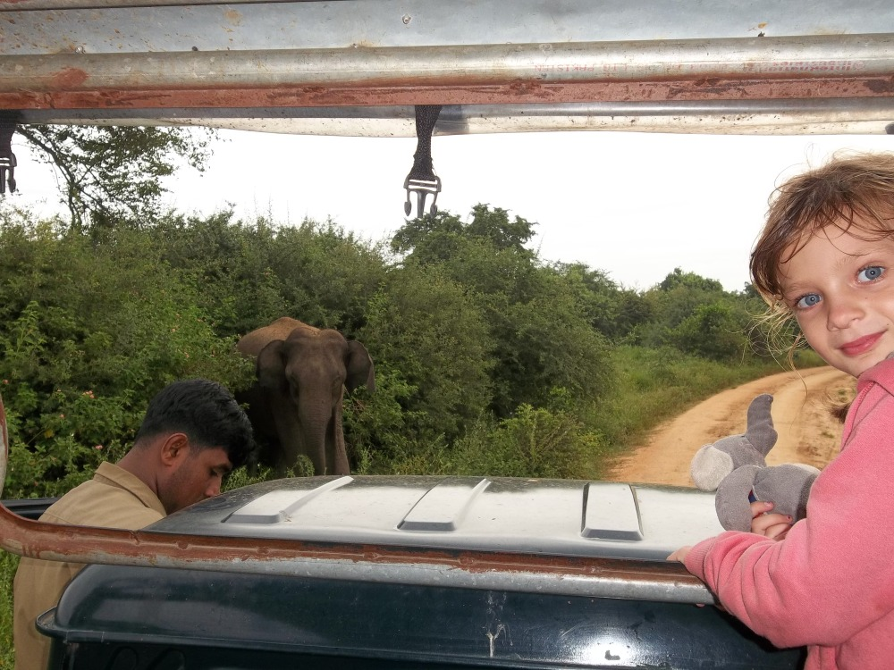 La vie sauvage des animaux, parc national d'Uda Walawe (6/6)