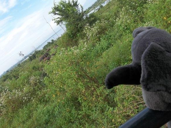 Doudou éléphant regarde sa famille sri-lankaise