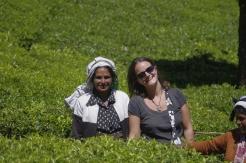 Balade dans les plantations de thé