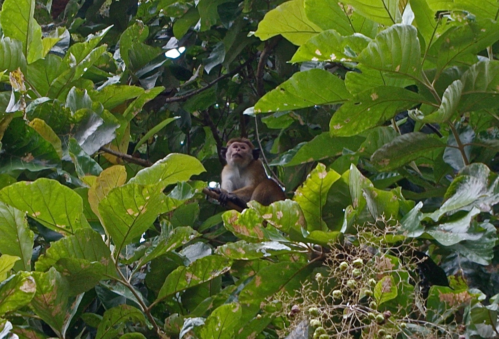 La vie sauvage des animaux, parc national d'Uda Walawe (2/6)
