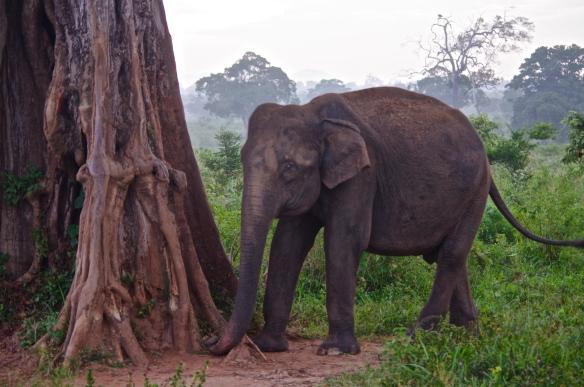 Le 1er éléphant du parc!