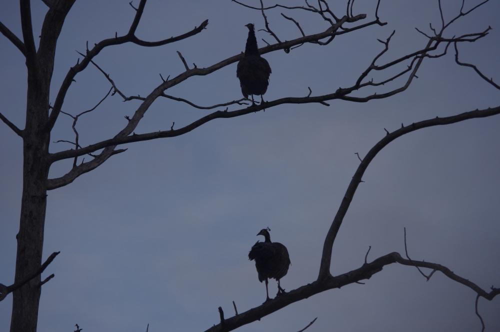 La vie sauvage des animaux, parc national d'Uda Walawe (5/6)