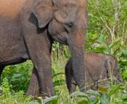 Petit éléphanteau d'un mois