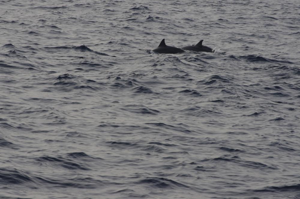 L'observation de LA baleine bleue (ou comment souffrir pendant 5 heures pour ELLE !) (5/6)