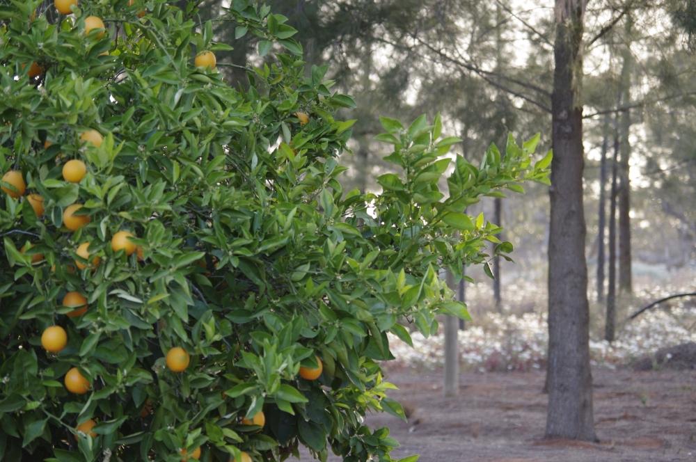 Vignobles au milieu de l'outback (5/6)